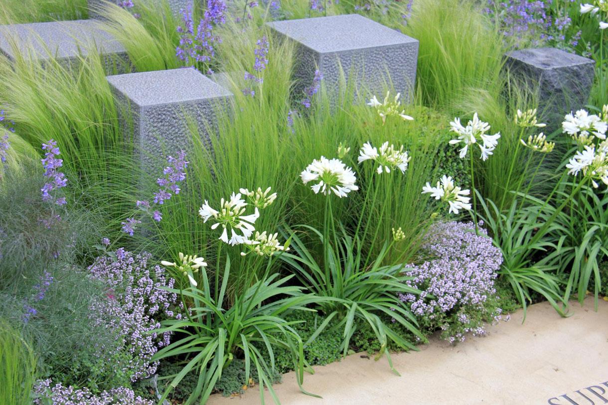 le top 3 des gramin es pour embellir votre jardin blog immobilier et jardin. Black Bedroom Furniture Sets. Home Design Ideas