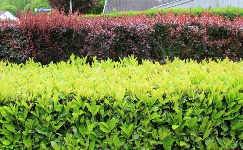 Planter une haie dans le jardin : comment faire ? – Blog immobilier ...